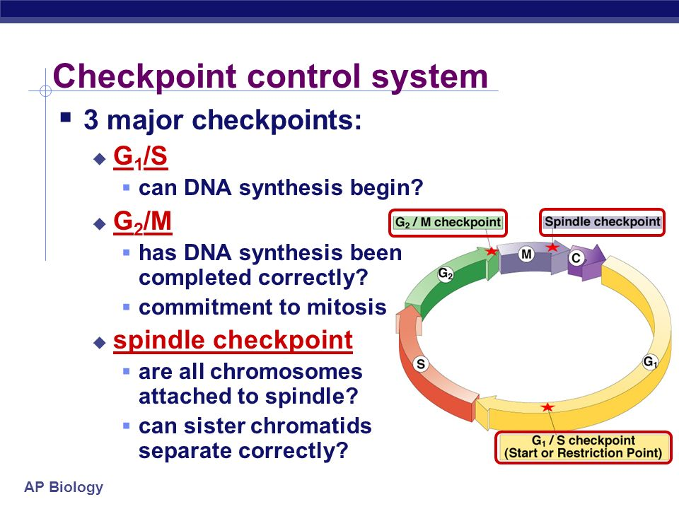 AP Biology Checkpoint control system Checkpoints cell cycle controlled by STOP & GO chemical signals at critical points signals indicate if key cellul