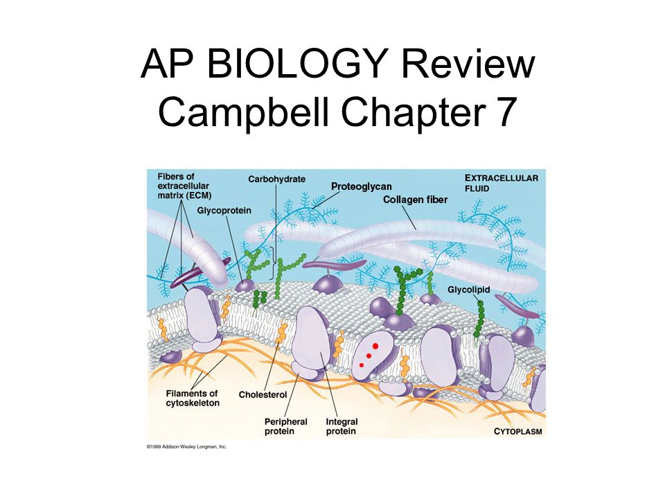 The swelling and bursting of animal cells when placed in a hypotonic environment is called _________________ The shrinking and shriveling up of animal cells when placed in a hypertonic environment is called ___________________ lysis crenation http://www.emc.maricopa.edu/faculty/farabee/BIOBK/BioBooktransp.html#Vesicle-mediated%20transport