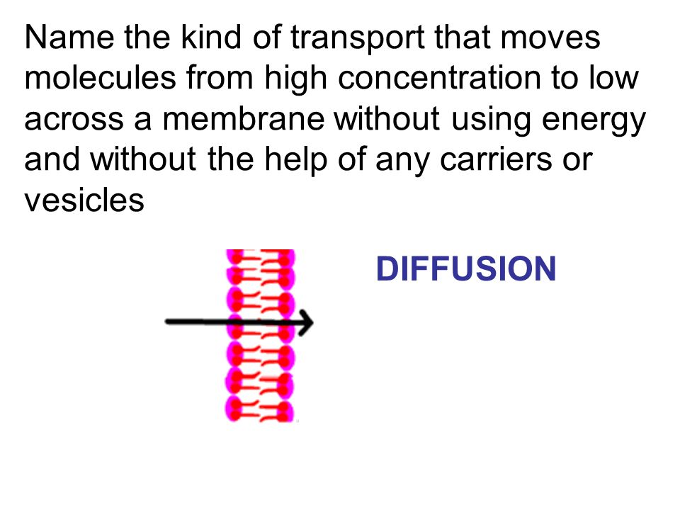 Name the kind of transport that moves molecules from high concentration to low across a membrane without using energy and without the help of any carr