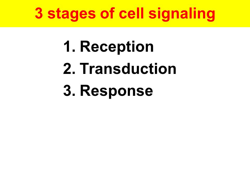 3 stages of cell signaling 1.Reception 2.Transduction 3.Response