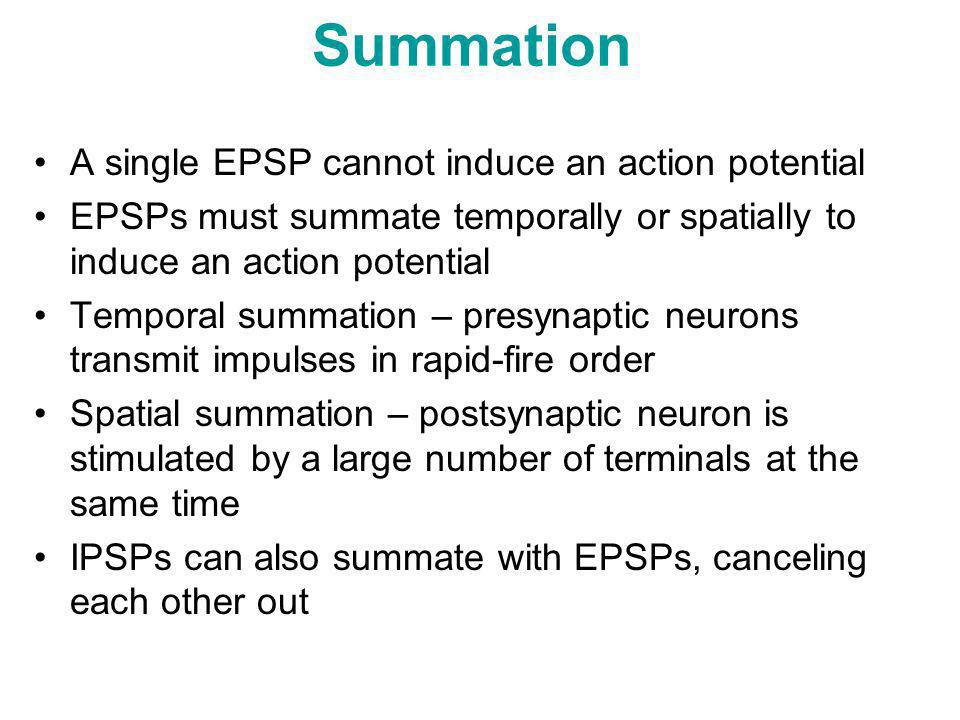 Summation A single EPSP cannot induce an action potential EPSPs must summate temporally or spatially to induce an action potential Temporal summation