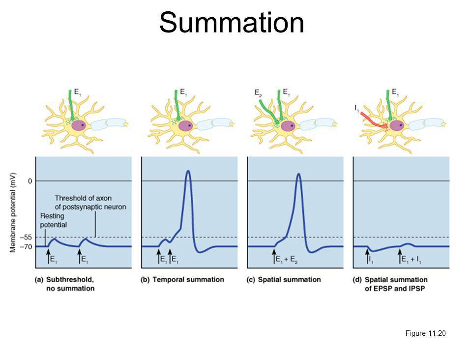 Summation Figure 11.20