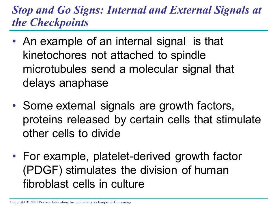 Copyright © 2005 Pearson Education, Inc. publishing as Benjamin Cummings Stop and Go Signs: Internal and External Signals at the Checkpoints An exampl