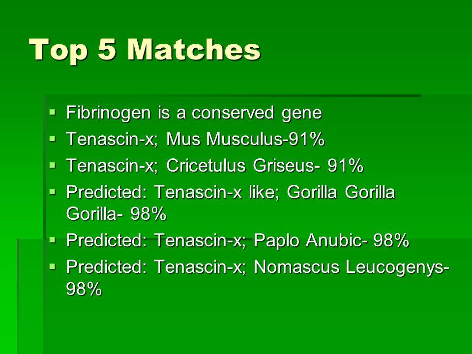 Top 5 Matches Fibrinogen is a conserved gene Fibrinogen is a conserved gene Tenascin-x; Mus Musculus-91% Tenascin-x; Mus Musculus-91% Tenascin-x; Cric