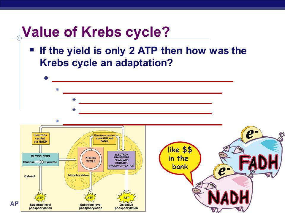 AP Biology Energy accounting of Krebs cycle Net gain=2 ATP =8 NADH + 2 FADH 2 1 ADP1 ATP ATP 2x 4 NAD + 1 FAD4 NADH + 1 FADH 2 pyruvate CO 2 3C 3x3x 1