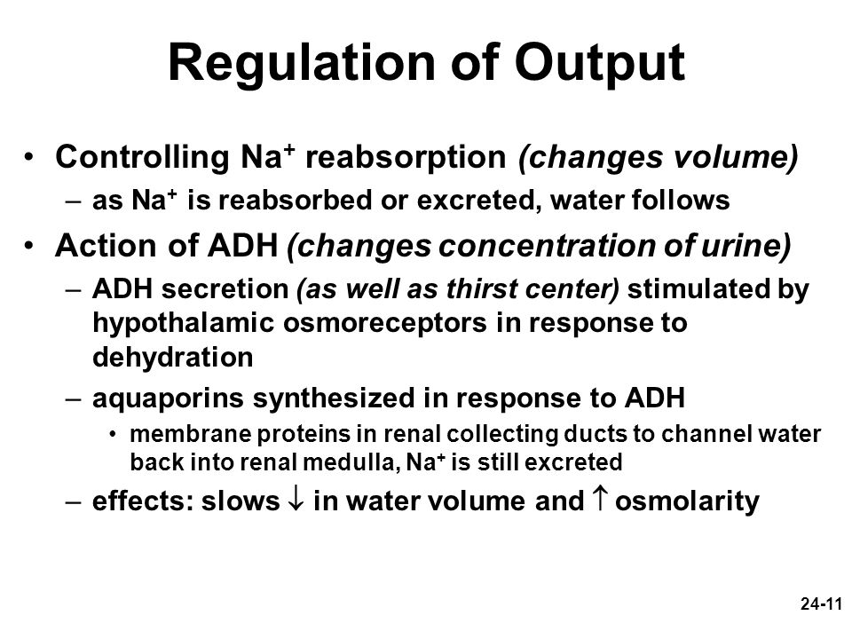 24-11 Regulation of Output Controlling Na + reabsorption (changes volume) –as Na + is reabsorbed or excreted, water follows Action of ADH (changes con