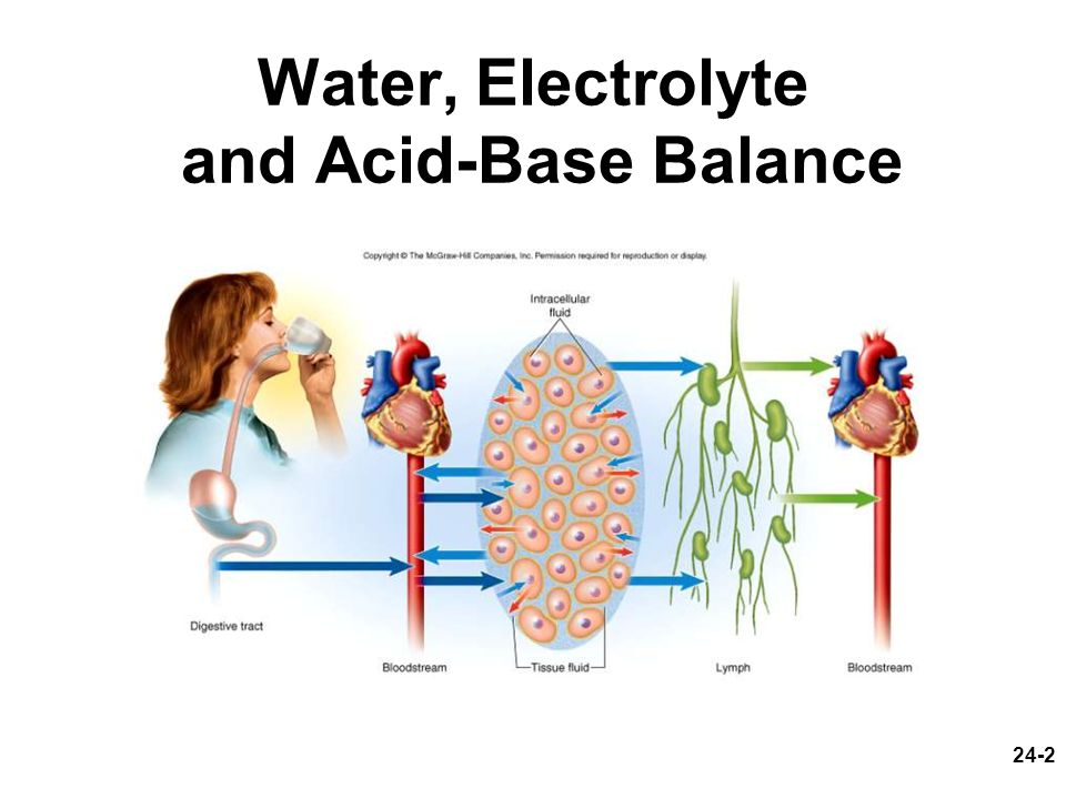 24-13 Disorders of Water Balance Fluid deficiency –volume depletion (hypovolemia) total body water, osmolarity normal hemorrhage, severe burns, chronic vomiting or diarrhea –dehydration total body water, osmolarity rises lack of drinking water, diabetes, profuse sweating, diuretics infants more vulnerable –high metabolic rate demands high urine excretion, kidneys cannot concentrate urine effectively, greater ratio of body surface to mass affects all fluid compartments –most serious effects circulatory shock, neurological dysfunction, infant mortality