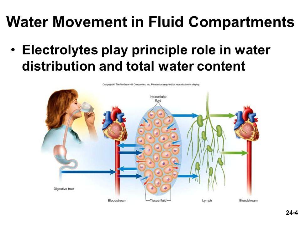 24-45 Buffering Mechanisms in Urine
