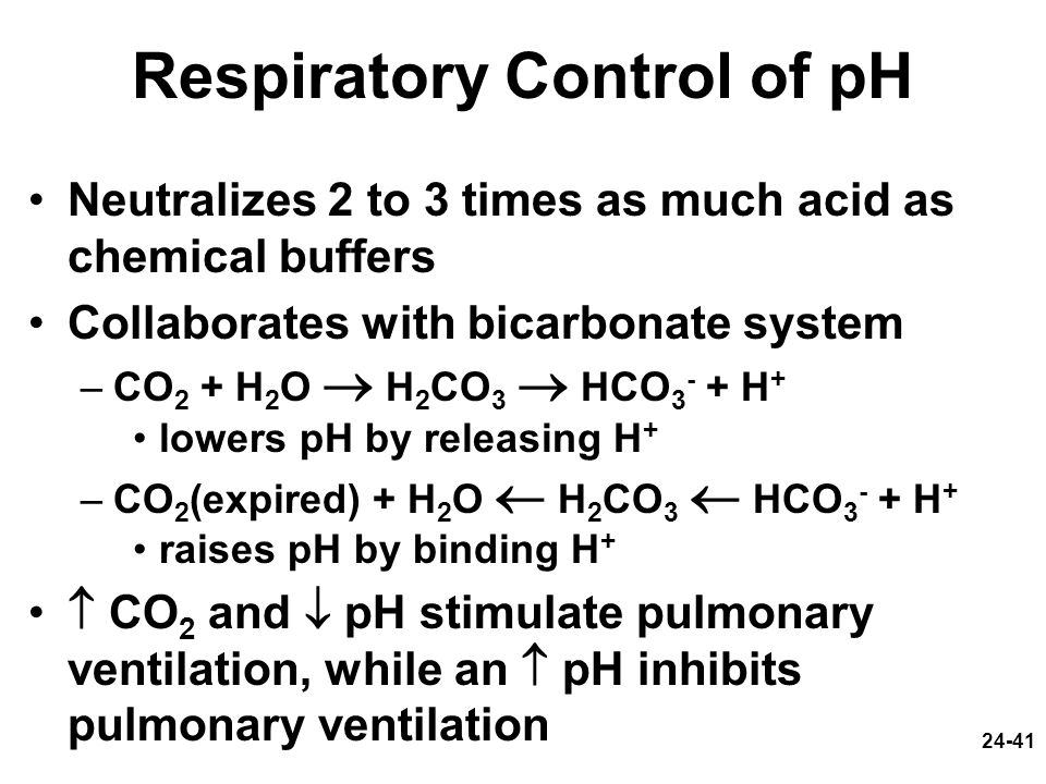 24-41 Respiratory Control of pH Neutralizes 2 to 3 times as much acid as chemical buffers Collaborates with bicarbonate system –CO 2 + H 2 O H 2 CO 3