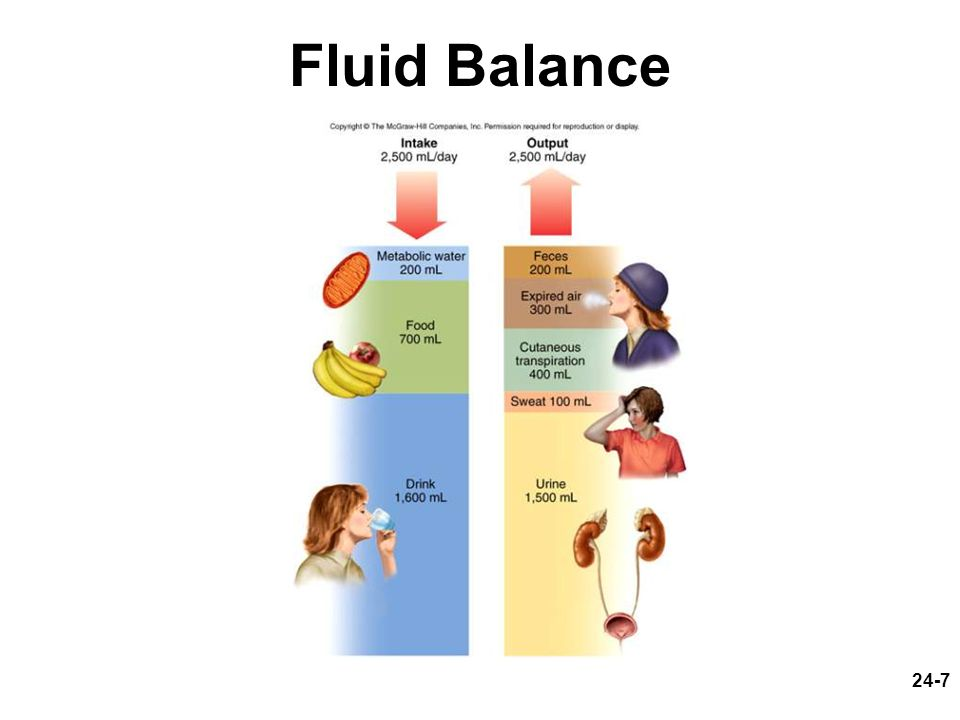 24-18 Electrolytes Function –chemically reactive in metabolism –determine cell membrane potentials –affect osmolarity of body fluids –affect bodys water content and distribution Major cations –Na +, K +, Ca 2+, H + Major anions –Cl -, HCO 3 -, PO 4 3-