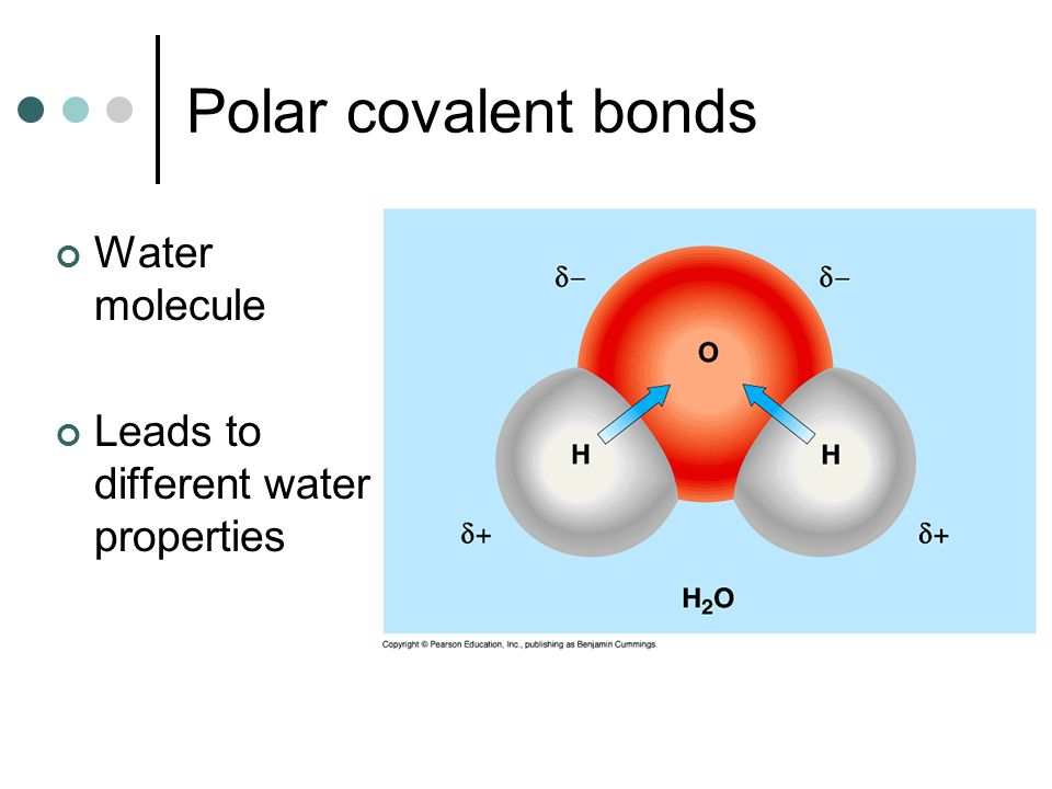 Polar covalent bonds Water molecule Leads to different water properties