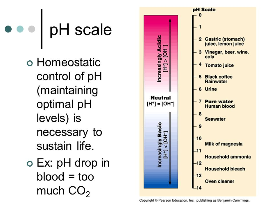 pH scale Homeostatic control of pH (maintaining optimal pH levels) is necessary to sustain life. Ex: pH drop in blood = too much CO 2