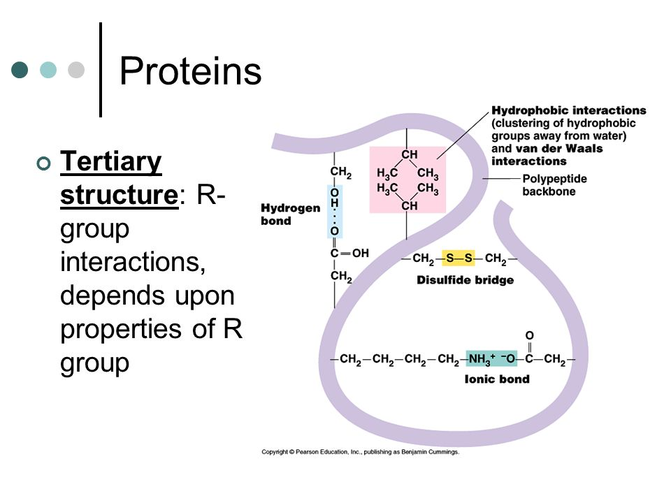 Proteins Tertiary structure: R- group interactions, depends upon properties of R group