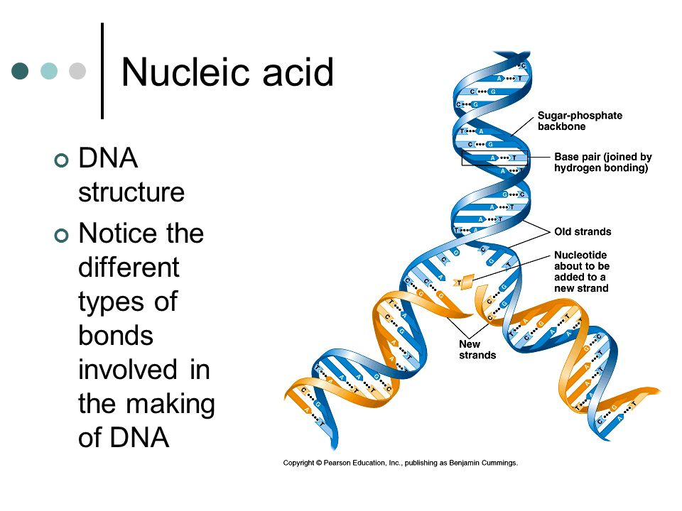 DNA structure Notice the different types of bonds involved in the making of DNA Nucleic acid