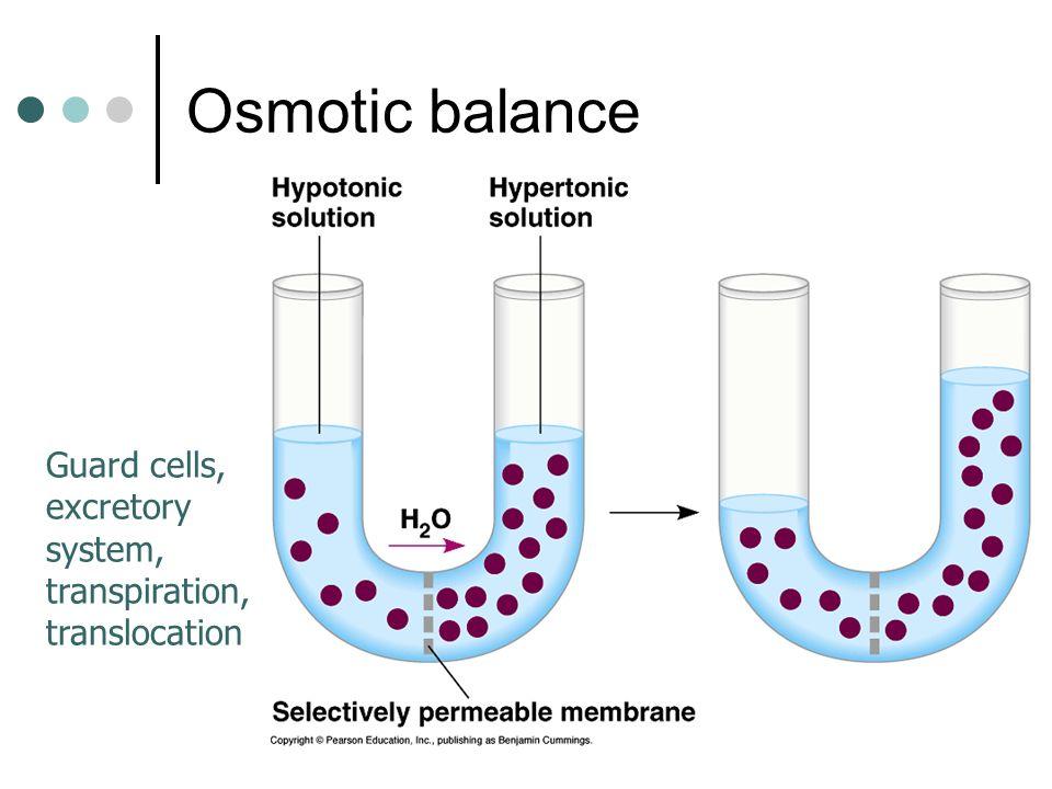 Osmotic balance Guard cells, excretory system, transpiration, translocation