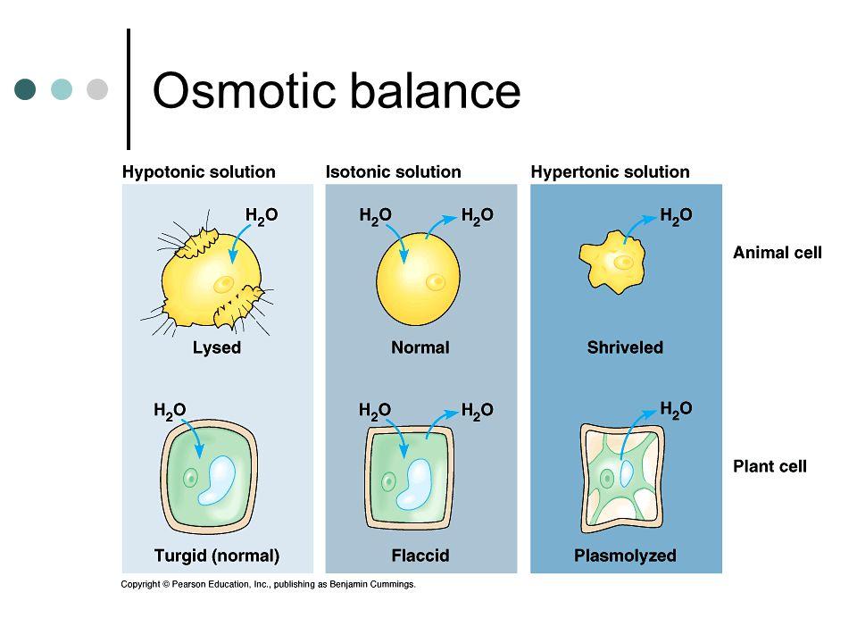 Osmotic balance