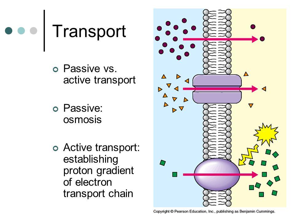 Transport Passive vs. active transport Passive: osmosis Active transport: establishing proton gradient of electron transport chain