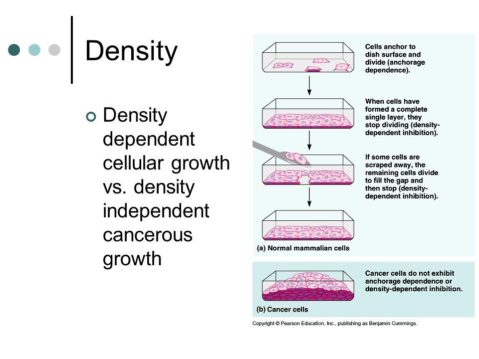 Density Density dependent cellular growth vs. density independent cancerous growth