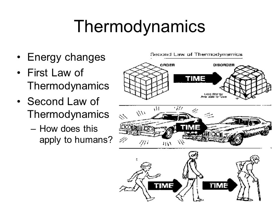 Thermodynamics Energy changes First Law of Thermodynamics Second Law of Thermodynamics –How does this apply to humans?