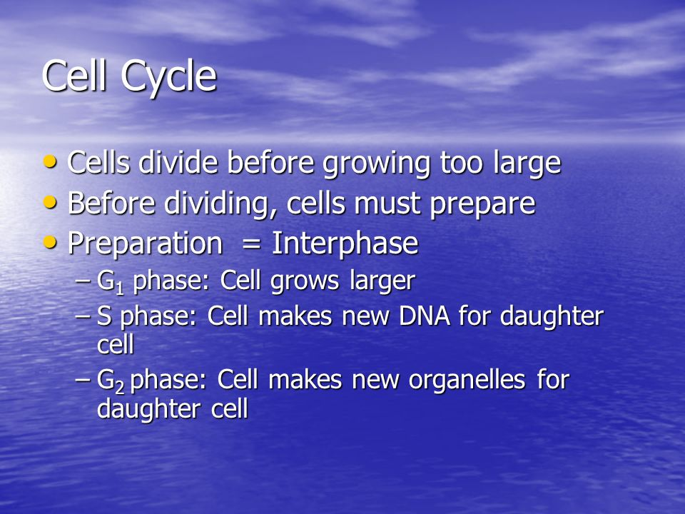Cell Cycle Cells divide before growing too large Cells divide before growing too large Before dividing, cells must prepare Before dividing, cells must