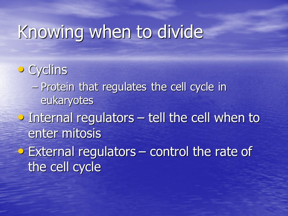 Knowing when to divide Cyclins Cyclins –Protein that regulates the cell cycle in eukaryotes Internal regulators – tell the cell when to enter mitosis