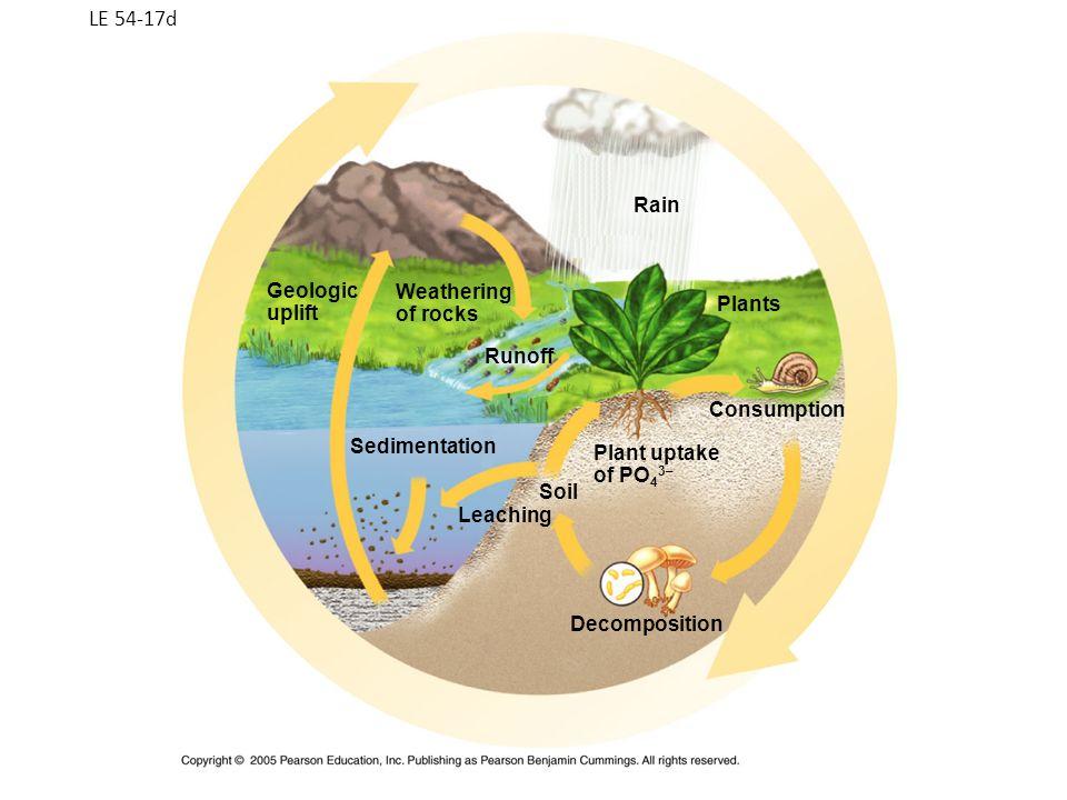 LE 54-17d Sedimentation Plants Rain Runoff Weathering of rocks Geologic uplift Soil Leaching Decomposition Plant uptake of PO 4 3– Consumption