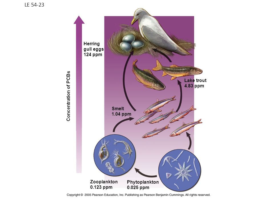 LE 54-23 Zooplankton 0.123 ppm Phytoplankton 0.025 ppm Lake trout 4.83 ppm Smelt 1.04 ppm Herring gull eggs 124 ppm Concentration of PCBs