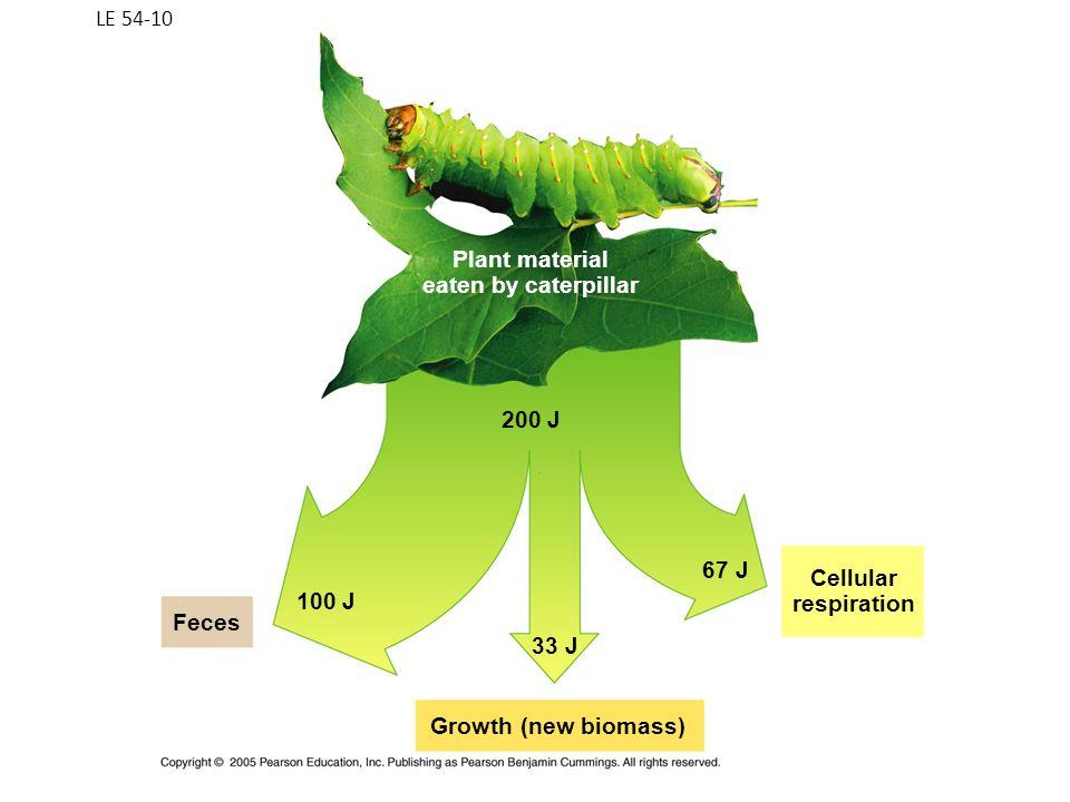 LE 54-10 Growth (new biomass) Cellular respiration Feces 100 J 33 J 67 J 200 J Plant material eaten by caterpillar