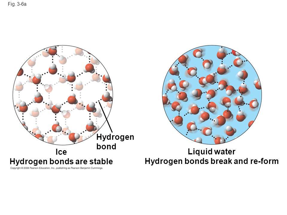 Fig. 3-6a Hydrogen bond Liquid water Hydrogen bonds break and re-form Ice Hydrogen bonds are stable