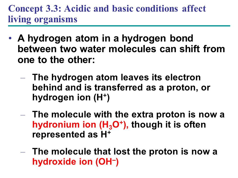 Concept 3.3: Acidic and basic conditions affect living organisms A hydrogen atom in a hydrogen bond between two water molecules can shift from one to