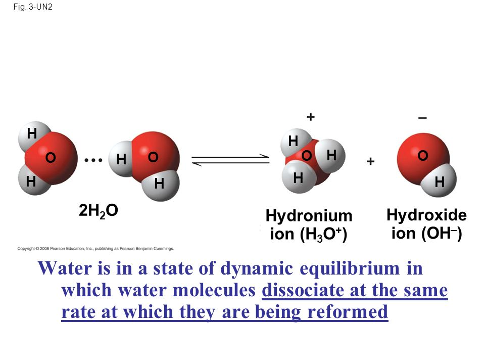 Fig. 3-UN2 Hydronium ion (H 3 O + ) Hydroxide ion (OH – ) 2H 2 O H H H H H H H H O O O O Water is in a state of dynamic equilibrium in which water mol