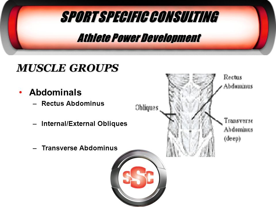 MUSCLE GROUPS Abdominals –Rectus Abdominus –Internal/External Obliques –Transverse Abdominus SPORT SPECIFIC CONSULTING Athlete Power Development