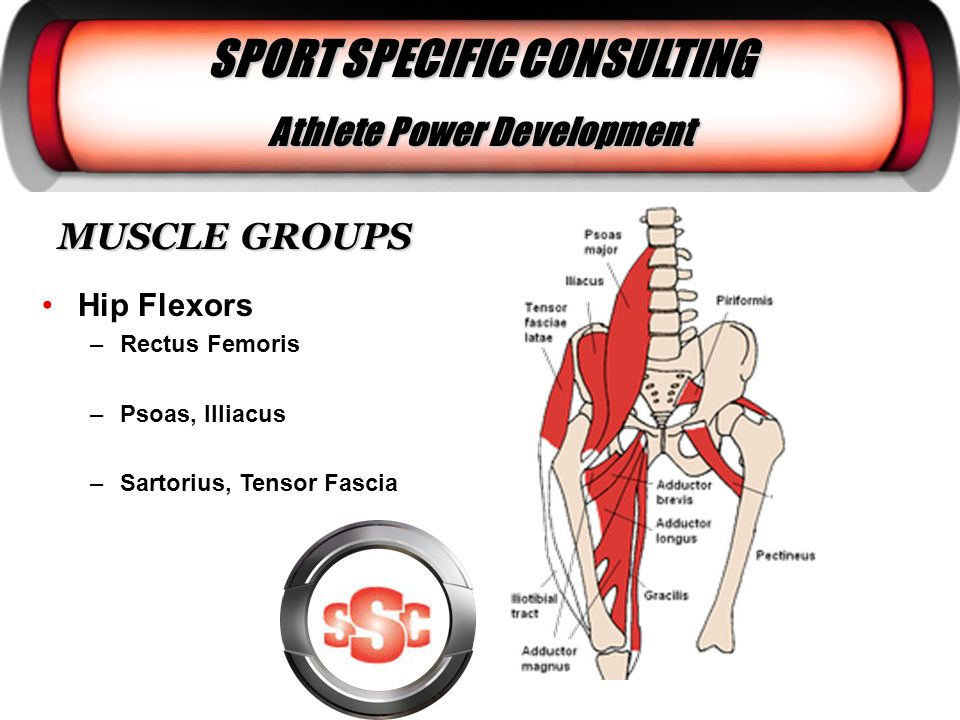 MUSCLE GROUPS Hip Flexors –Rectus Femoris –Psoas, Illiacus –Sartorius, Tensor Fascia SPORT SPECIFIC CONSULTING Athlete Power Development