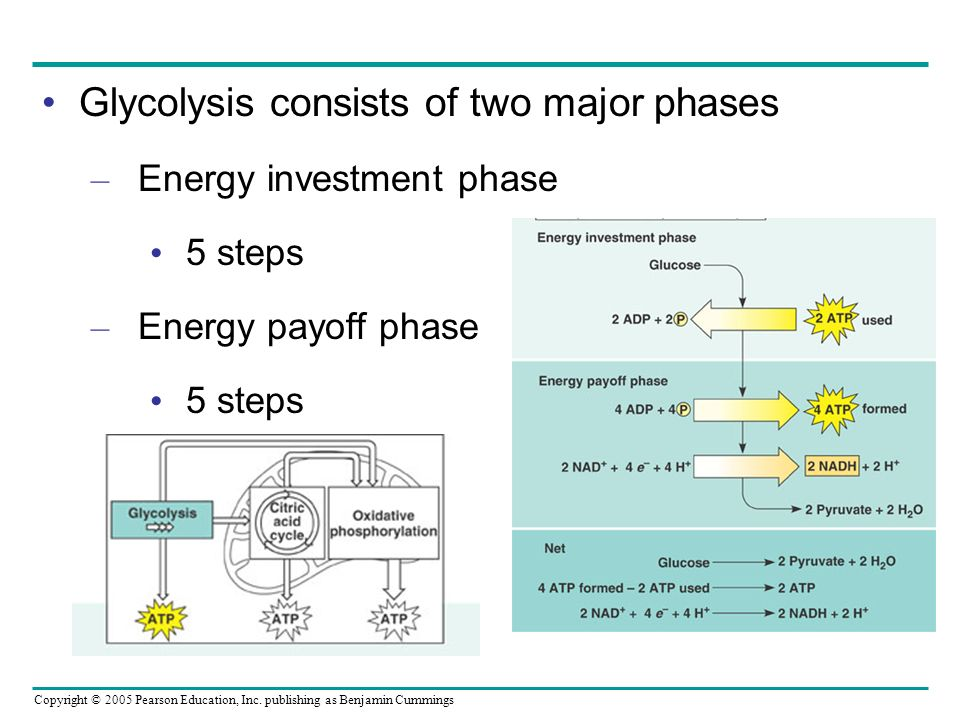 Copyright © 2005 Pearson Education, Inc. publishing as Benjamin Cummings Glycolysis consists of two major phases – Energy investment phase 5 steps – E