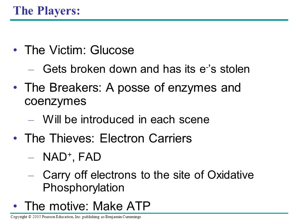 Copyright © 2005 Pearson Education, Inc. publishing as Benjamin Cummings The Players: The Victim: Glucose – Gets broken down and has its e - s stolen