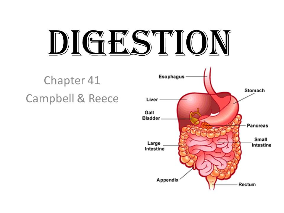 Digestion Chapter 41 Campbell & Reece