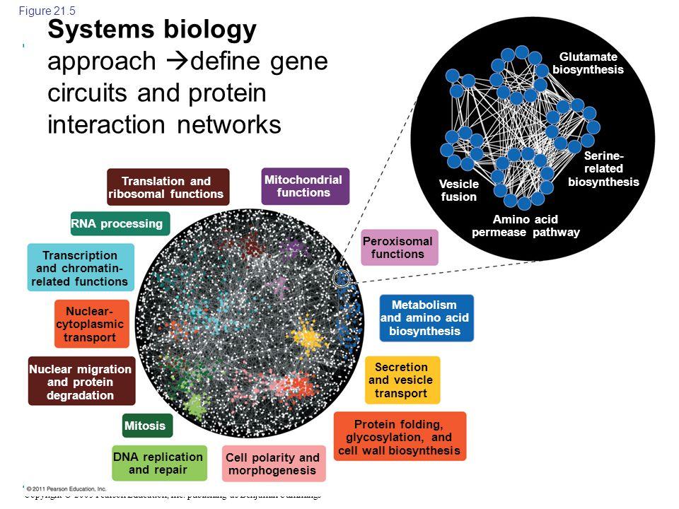 Copyright © 2005 Pearson Education, Inc. publishing as Benjamin Cummings Translation and ribosomal functions Nuclear- cytoplasmic transport RNA proces