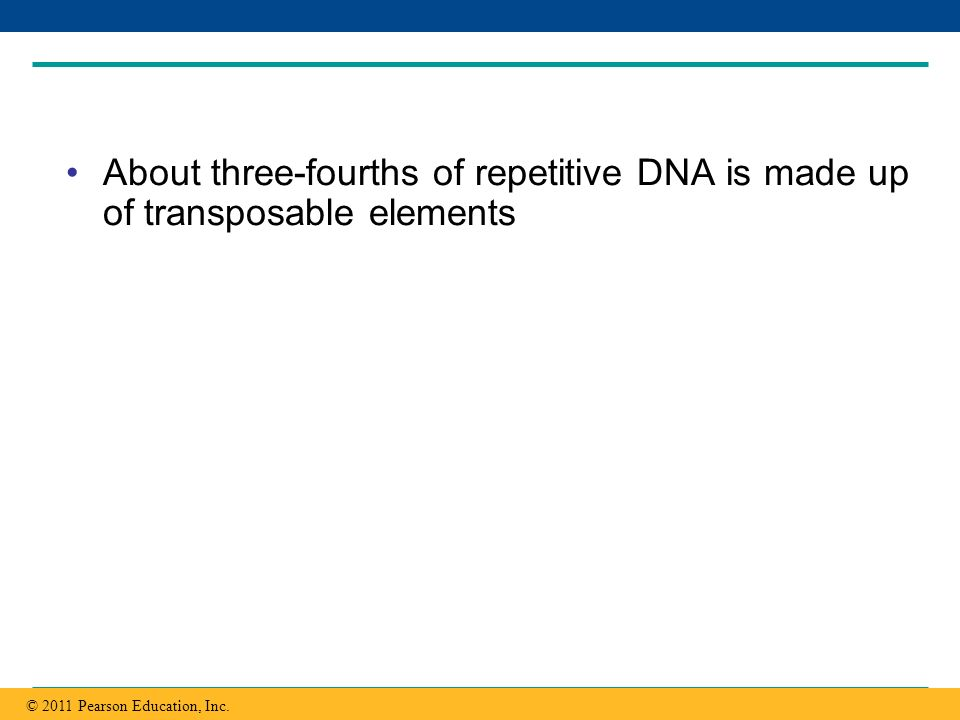 Copyright © 2005 Pearson Education, Inc. publishing as Benjamin Cummings About three-fourths of repetitive DNA is made up of transposable elements © 2