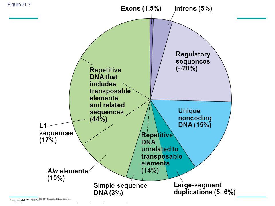 Copyright © 2005 Pearson Education, Inc. publishing as Benjamin Cummings Figure 21.7 Exons (1.5%) Introns (5%) Regulatory sequences ( 20%) Unique nonc