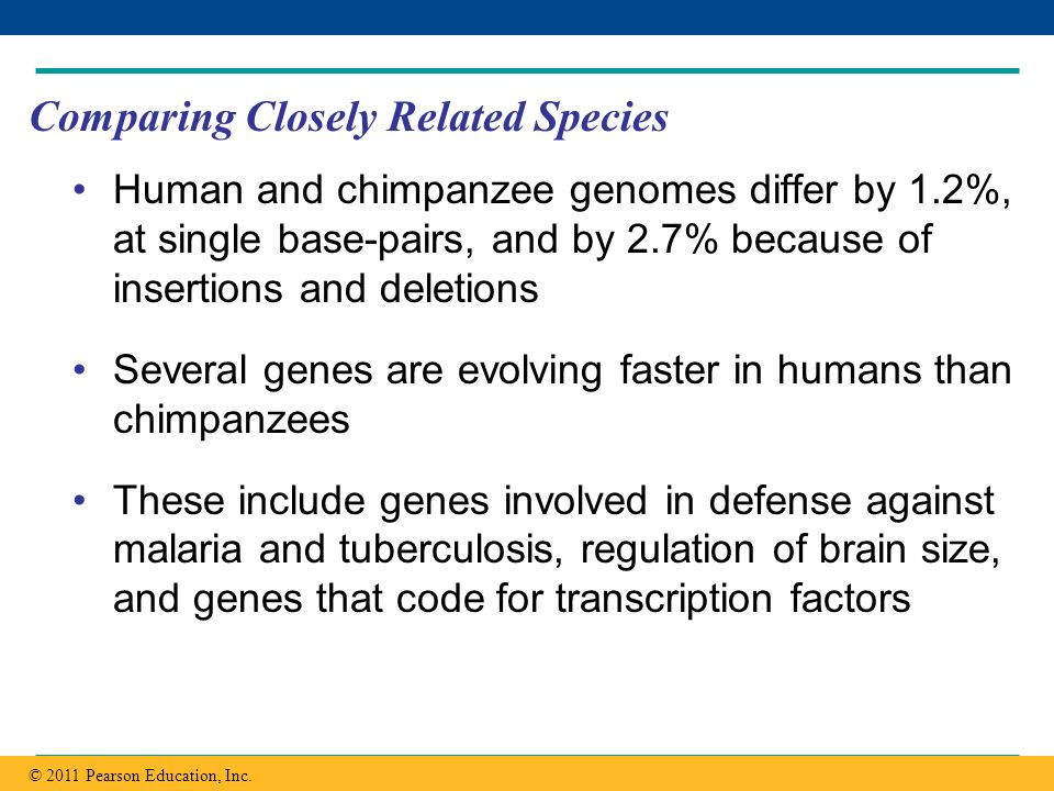 Copyright © 2005 Pearson Education, Inc. publishing as Benjamin Cummings Comparing Closely Related Species Human and chimpanzee genomes differ by 1.2%