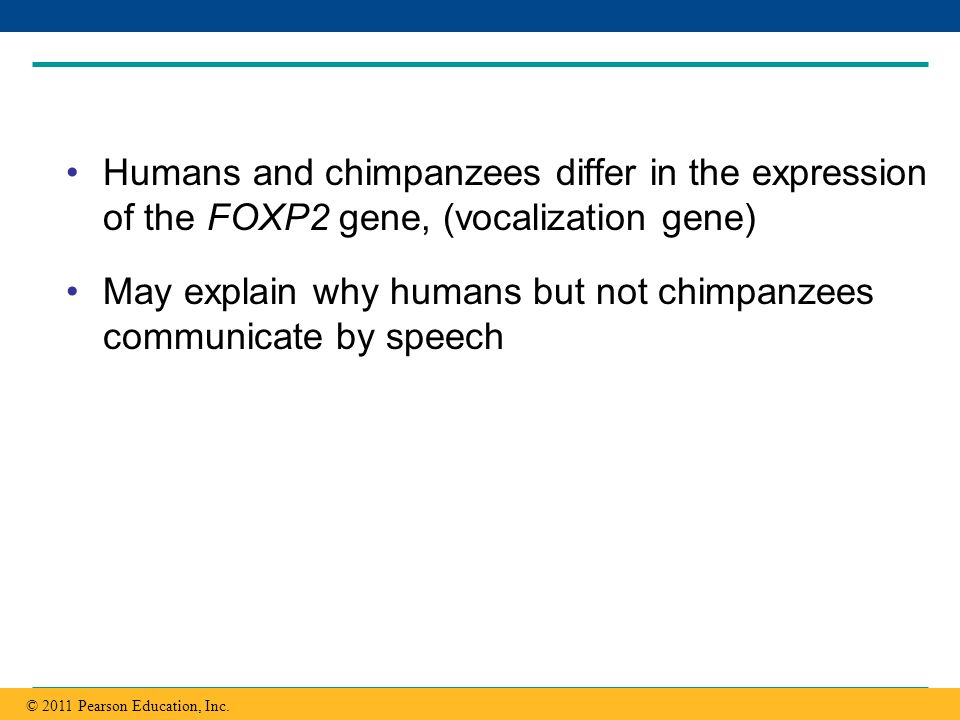 Copyright © 2005 Pearson Education, Inc. publishing as Benjamin Cummings Humans and chimpanzees differ in the expression of the FOXP2 gene, (vocalizat