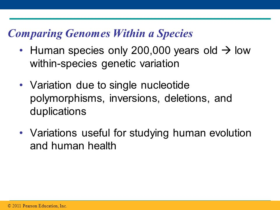 Copyright © 2005 Pearson Education, Inc. publishing as Benjamin Cummings Comparing Genomes Within a Species Human species only 200,000 years old low w