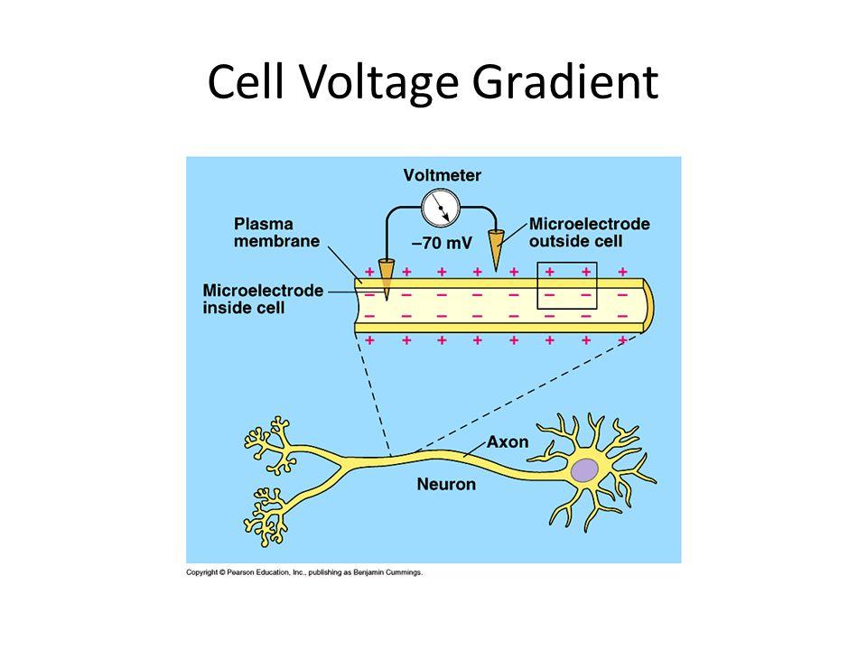Cell Voltage Gradient