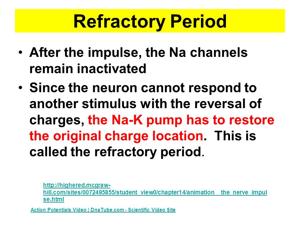 Refractory Period After the impulse, the Na channels remain inactivated Since the neuron cannot respond to another stimulus with the reversal of charges, the Na-K pump has to restore the original charge location.