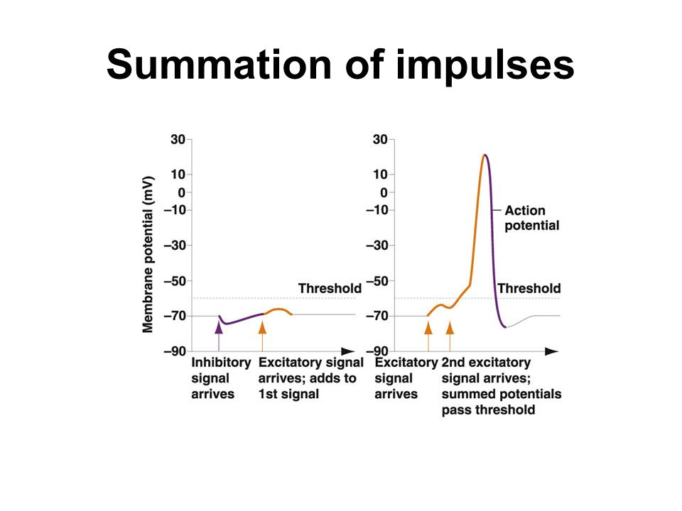 Summation of impulses