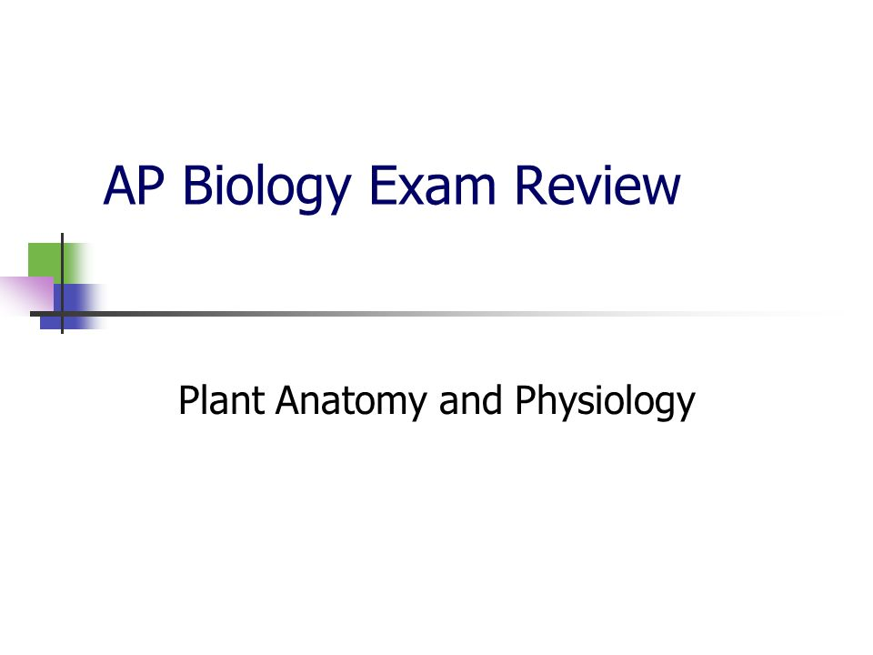 AP Biology Exam Review Plant Anatomy and Physiology