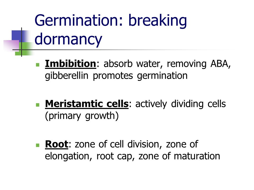 Germination: breaking dormancy Imbibition: absorb water, removing ABA, gibberellin promotes germination Meristamtic cells: actively dividing cells (pr