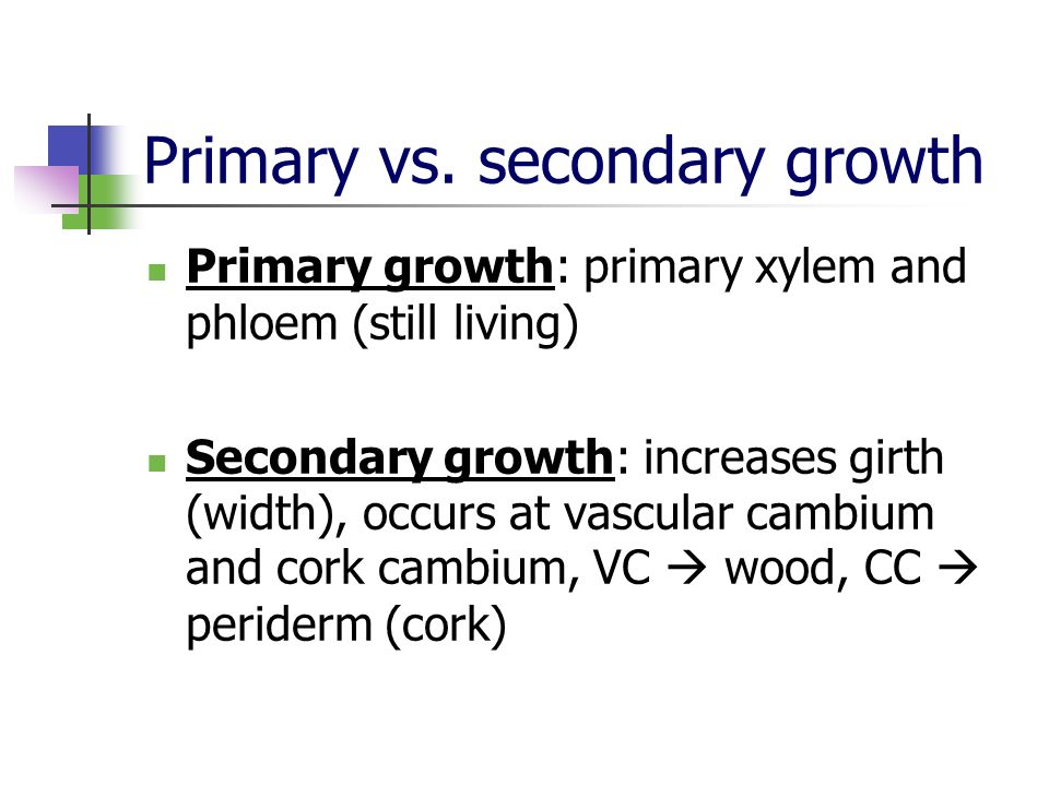 Primary vs. secondary growth Primary growth: primary xylem and phloem (still living) Secondary growth: increases girth (width), occurs at vascular cam