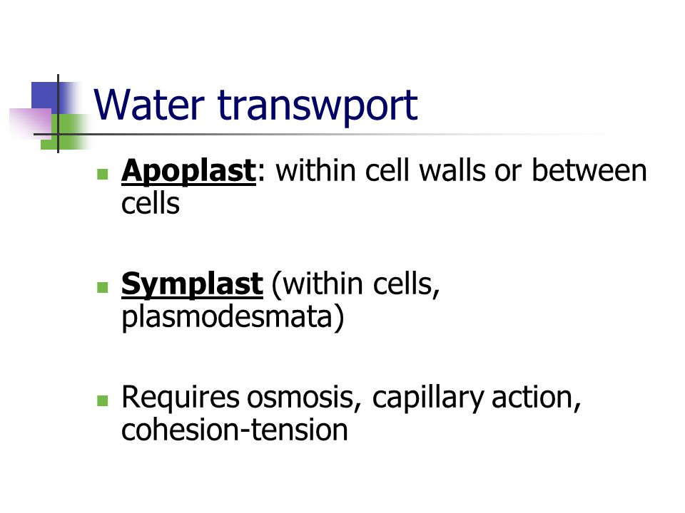 Water transwport Apoplast: within cell walls or between cells Symplast (within cells, plasmodesmata) Requires osmosis, capillary action, cohesion-tens