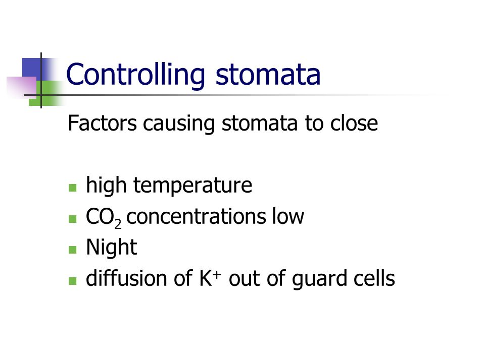 Controlling stomata Factors causing stomata to close high temperature CO 2 concentrations low Night diffusion of K + out of guard cells
